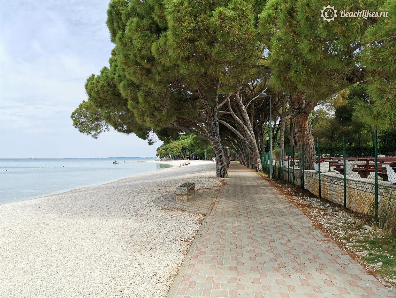 Лучший пляж в Пуле с хвойным лесом